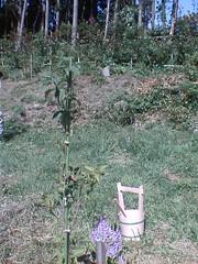 2005/10/01 Yamabousi