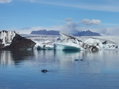 A Seal at the Glacial Lagoon