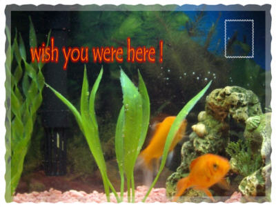 fishes postcard