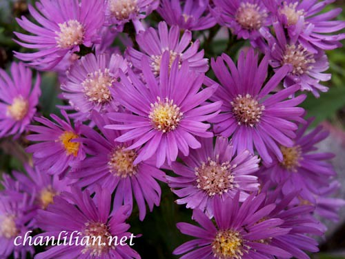 humble, little purple flower  best recipes, foods and travel, Beautiful flower