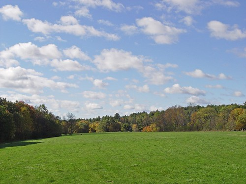 field/sky/trees