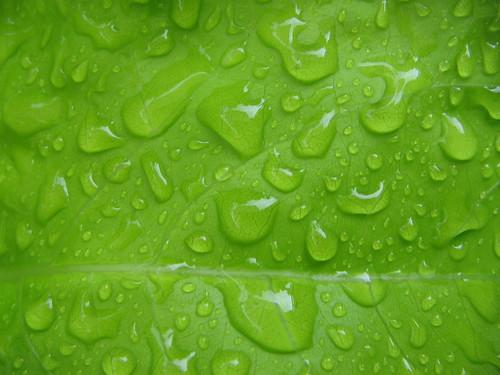 drops3
