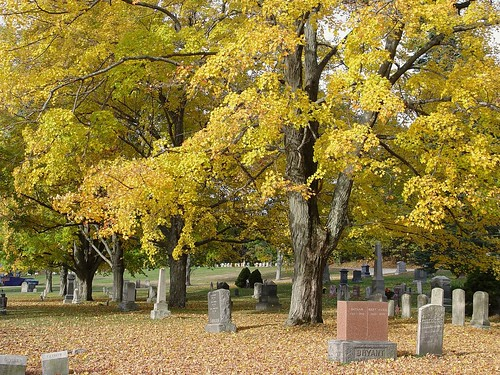 cemetary trees, view 1