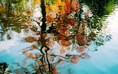 reflections of autumn (film)