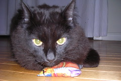Ares settles on the catnip pillow