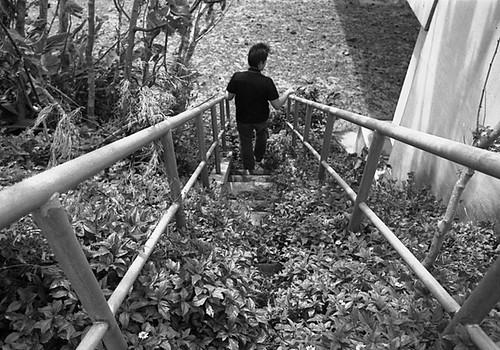 石垣島の階段