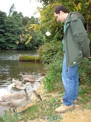 Con los patos y cisnes