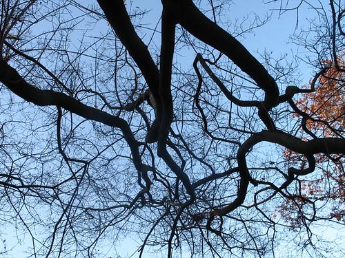 Fall Trees, Stromovka