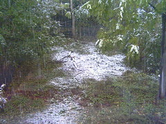 Snow Picture #1, October 29 2005