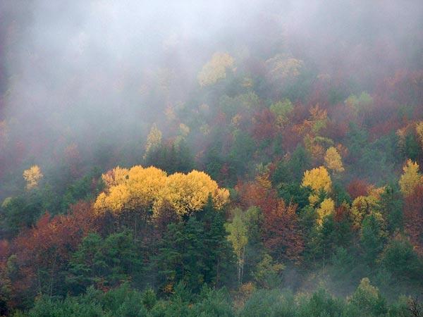 Niebla sobre los bosques de Fragen