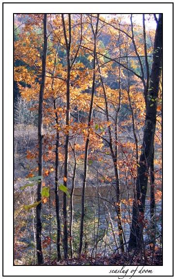 Autumn Color 1