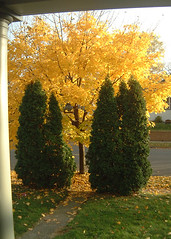 yellow tree