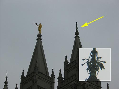 Peregrine falcon @ Temple Square