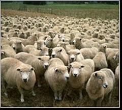 轉載: 牧羊人