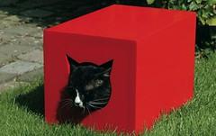 redcathouse