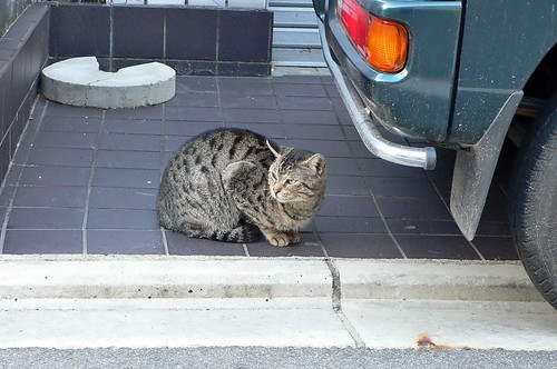 道ばたの猫