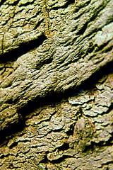 brick texture example