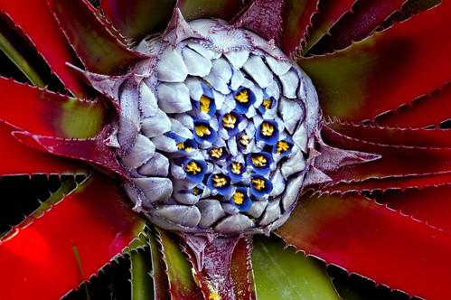Bromeliad Redux I