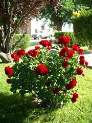 Gaiman - 05 - Roses
