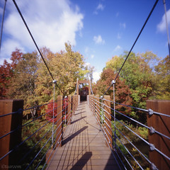 Autumnal tints bridge