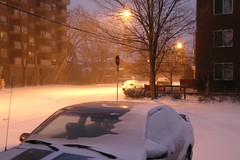 Snowy Mornings