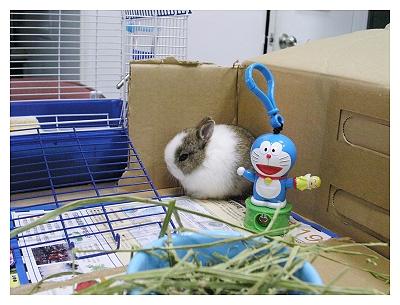 新手養兔兩星期心得_第4天