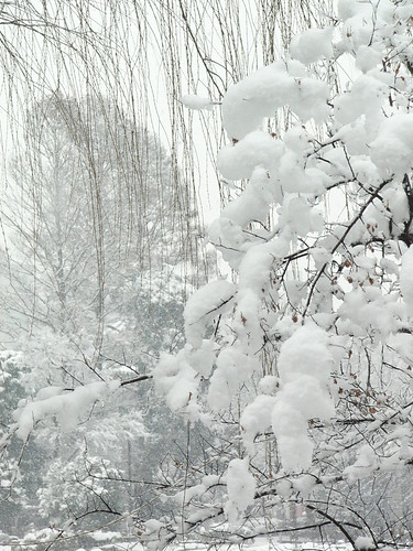 Snowy Ueno, Tokyo