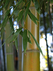 Bamboo 060129 #02