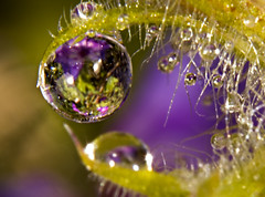 Garden in a Water Drop