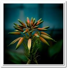 Fleurs et vegetaux photo by Zed The Dragon