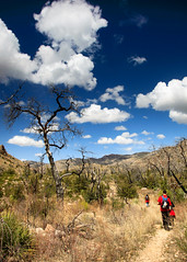 sycamore trail, mt lemmon, arizona [_MG_0852] photo by marios savva