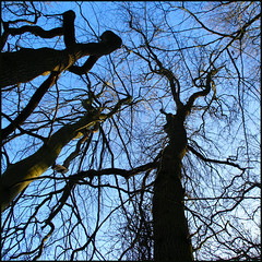 witches........ photo by atsjebosma