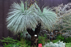 Grass Tree photo by chooyutshing