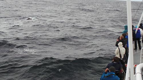 2013-0721 787 Andenes Walvissafariboot