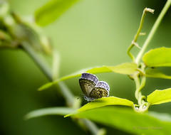 A Tiny Little Butterfly photo by Sharad Medhavi