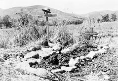 1944- Italie- Tombes de soldats français de la 1re Division Française Libre (1re DFL) tués devant Pontecorvo.