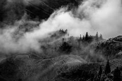 Longji Mist photo by adams.co.tt