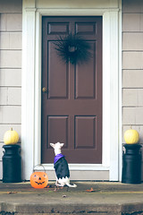 Trick or treat. photo by melissann