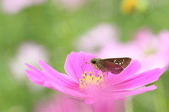 a skipper. photo by cate♪