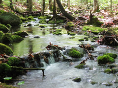 Mossy stream in the woods photo by bobtravis