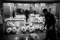 After the tuna auction, Tsukiji Fish Market, Tokyo photo by fabiolug