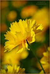 flowers - Blumen photo by rafischatz... www.rafischatz-photography.de