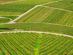 Vineyard Patterns photo by Batikart