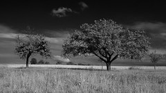 sweet harmony photo by photobeam ( Better grays through research © )