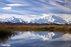 Fall in Denali photo by Critter Seeker
