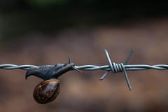 Mimikry photo by Herr Olsen