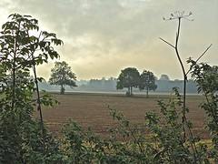 Betchworth Fields photo by Deepgreen2009