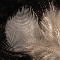 feathers 022 photo by Photospencer 100,000