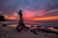 Seahorse Sunset photo by Steve Flowers
