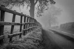 Freezing Fog photo by Alan E Taylor